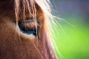 Horse Eye by JuncalDelacroix