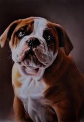 Nate dog by SpringzArt