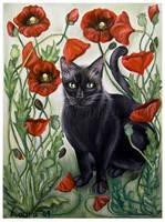 Cat in a poppy field by Marmaluke