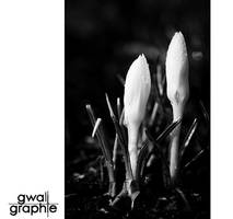 black and white spring 1 by Gwali