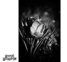 black and white spring 2 by Gwali