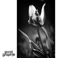 black and white spring 3 by Gwali