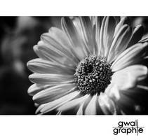 black and white spring 4 by Gwali