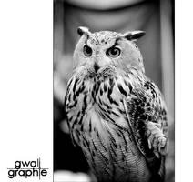 eagle owl 2 by Gwali