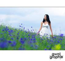 cornflowers 3 by Gwali