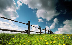 Spring by 007TINAR