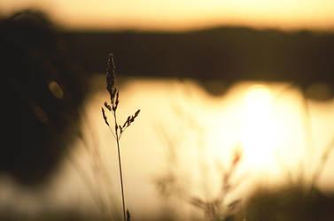 [summer sunset] by Julia-Berk
