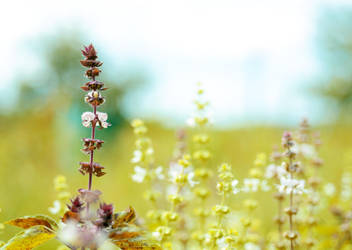 Summer plants by Julia-Berk