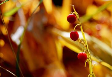 autumn berries by Julia-Berk