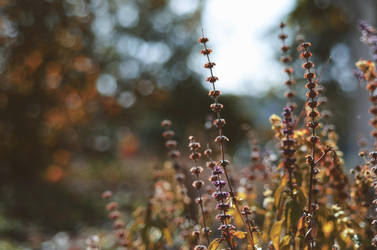 colors of autumn by Julia-Berk