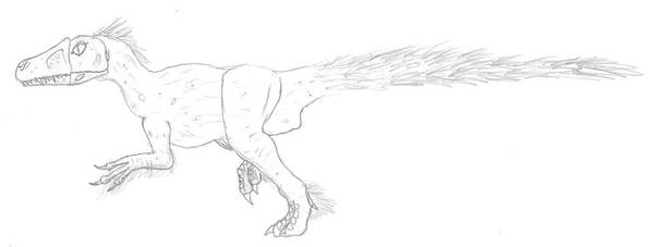 Sinocalliopteryx 0810.31 by Dilong-paradoxus