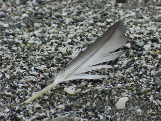 Feather 1802.08 by Dilong-paradoxus