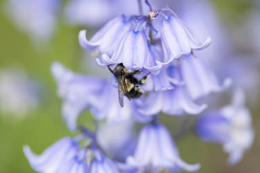 Bee 1805.11 by Dilong-paradoxus