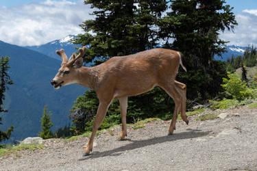 Deer 1806.23 by Dilong-paradoxus
