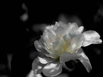 flower #29 by dev-moon