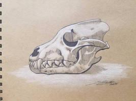 Wolf Skull Sketch by SwaggZilla305