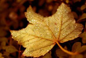Leaf by tangratannakra