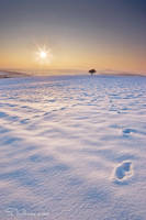 Warm as Ice by tangratannakra