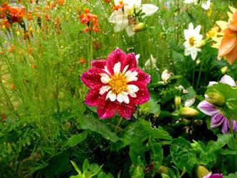 Floral web by WickedWitchOfTheWeb