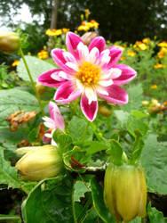 Fleur by WickedWitchOfTheWeb