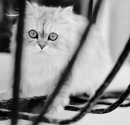 Look Into My Eyes by vi-ol-et