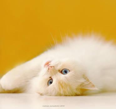 dreamy orange by vi-ol-et