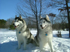 Snow Dogs 2 by Valentino1024