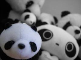 Panda Love by summerkist