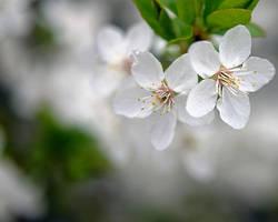 spring by focht