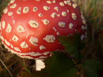 Autumn Red by Hazelino