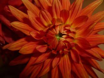 Autumn Flower by Hazelino