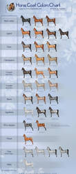 Horse coat colors chart by AonikaArt