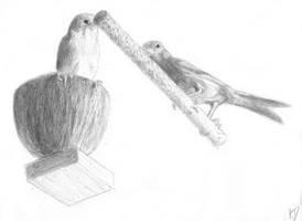 Swiss Birds by kittycheetah14
