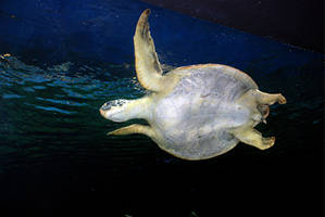 Sea Turtle by KeenPhotography