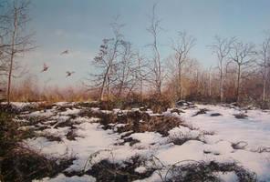 Castor hanglands by jamesgreen