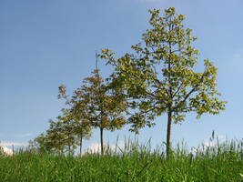 Spring Trees by Rylius