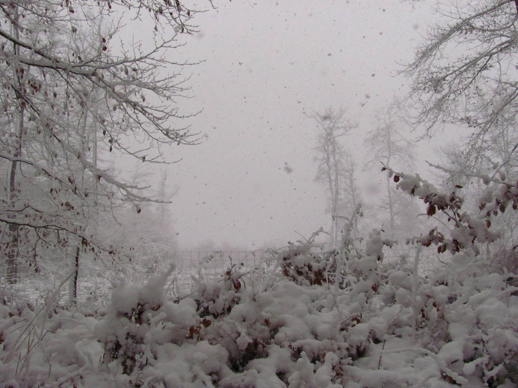 Snow Shrubs by Rylius