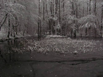 Freezing Pond by Rylius