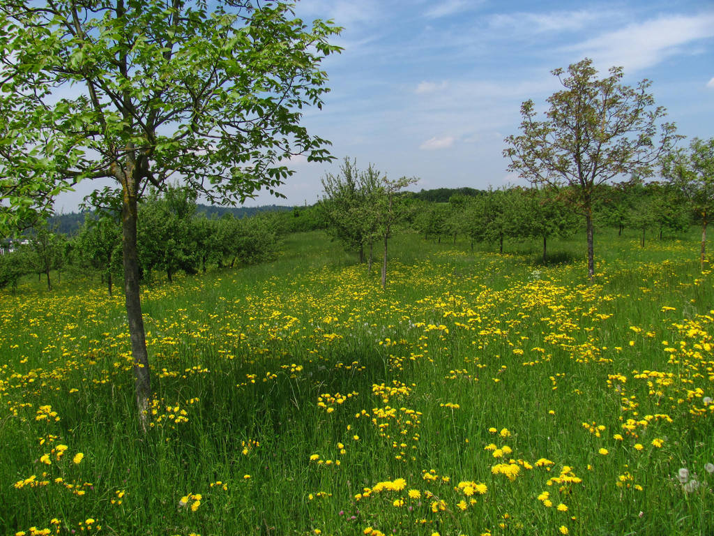 Spring Field by Rylius