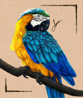 Blue and Gold Macaw by trishagaile