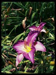 Botanic Gardens 2 by dridgett