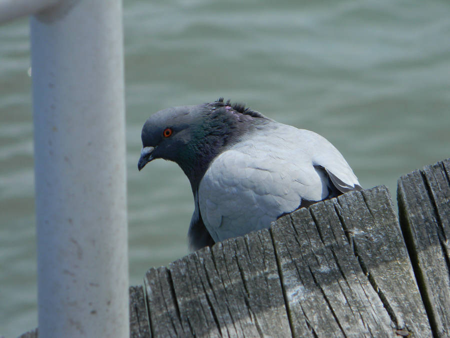 Pigeon Watching by ljaggard