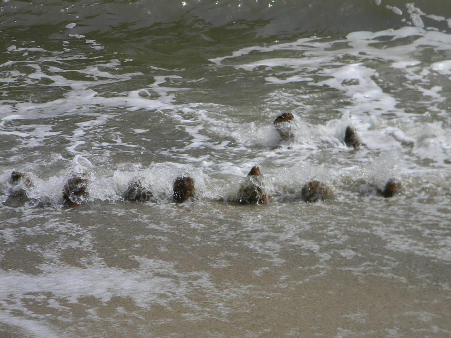 Retreating Waves by ljaggard