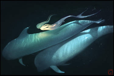 Whales by GaudiBuendia