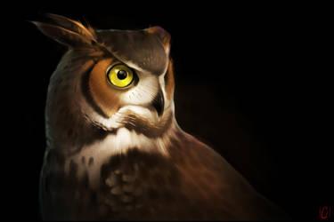 Portrait of owl by GaudiBuendia