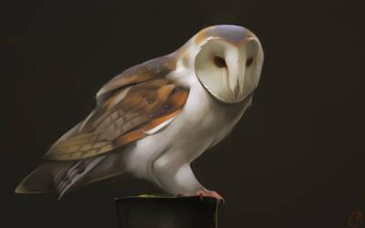 barn owl by GaudiBuendia