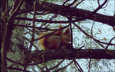 squirrel by CVRD