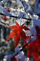Winter 2011 by MagjikCapp
