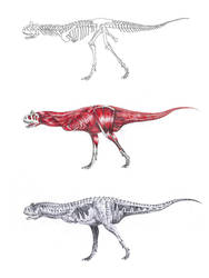 Carnotaurus sastrei by Chimerum
