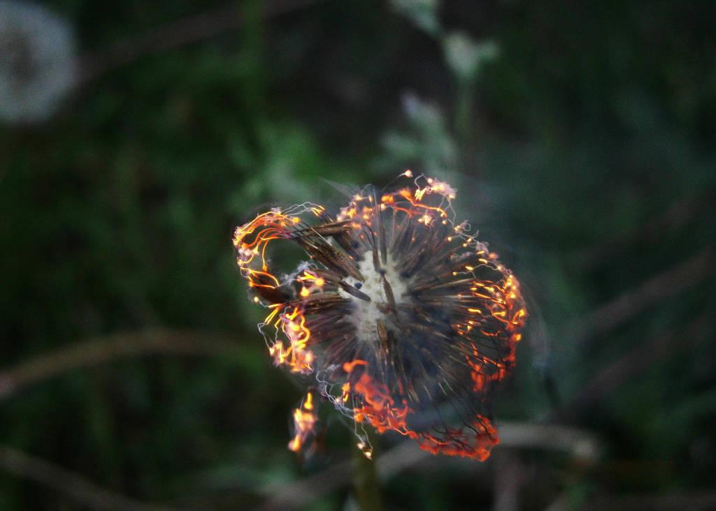 FIRE by VikaJoker